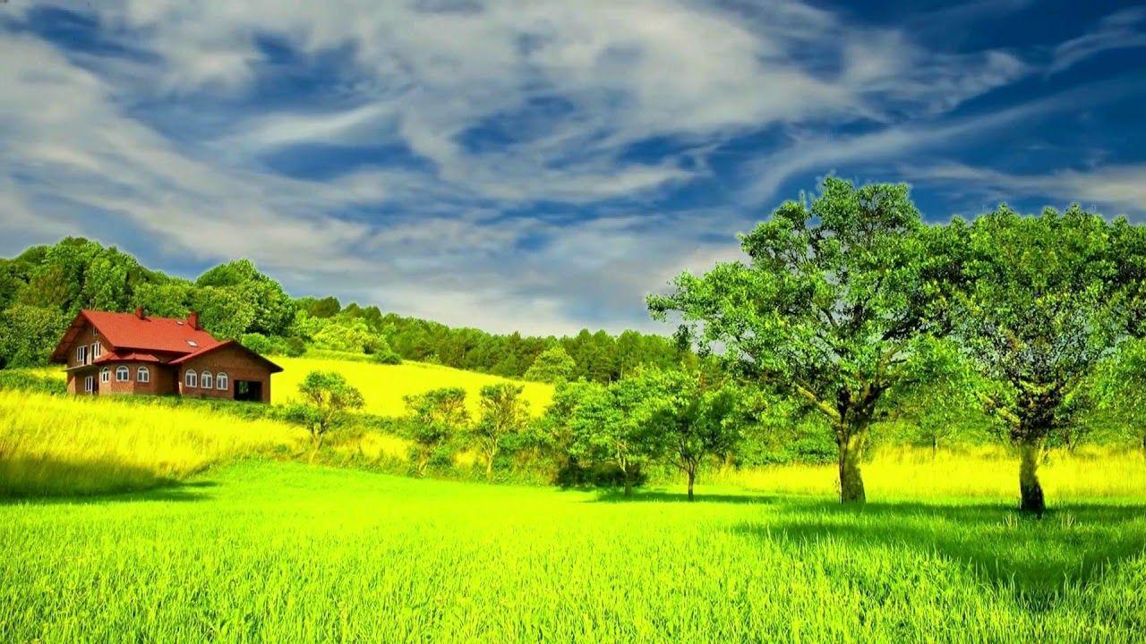 Hd 1080p Beautiful Green Nature Scenery Video Royalty Free