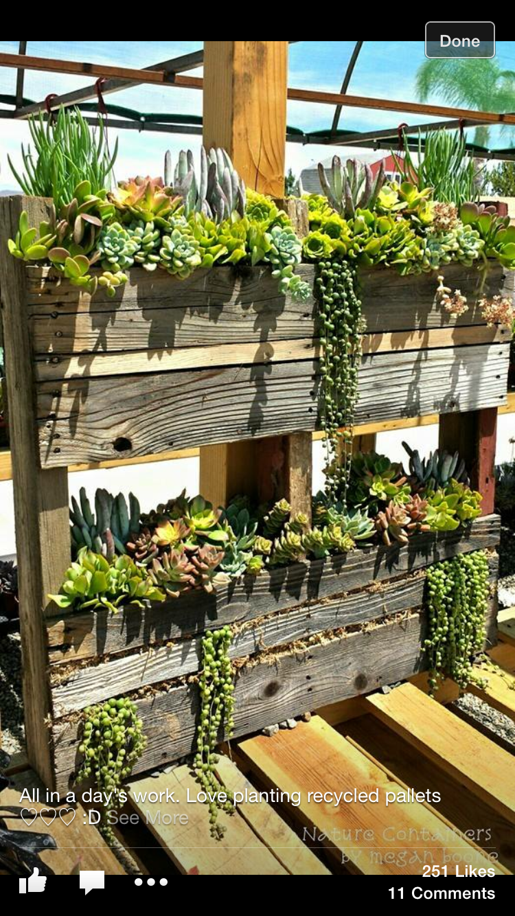 Succulents In Containers Planting Flowers Vertical Succulent Gardens Herb Garden
