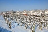 Vineyards on snowy fields and small town on background at winter in Piedmont, Northern Italy  stock photography