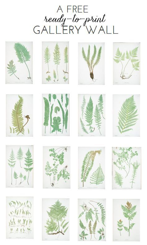 Ready To Print Gallery Wall Fern Botanicals Botanical Prints
