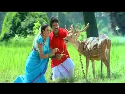 Raasa Raasa Unnai Flv My Favourite Tamil Songs Songs Animals Horses