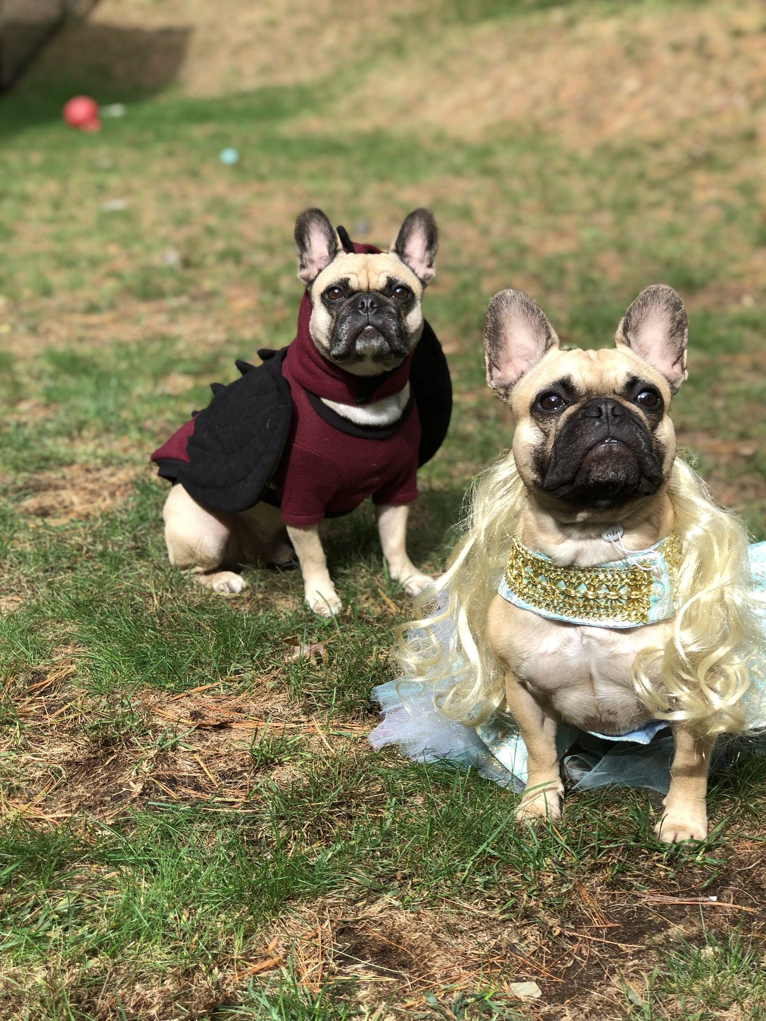 Chewy And Daya Dog Costumes Cute Dogs Images Dog Halloween