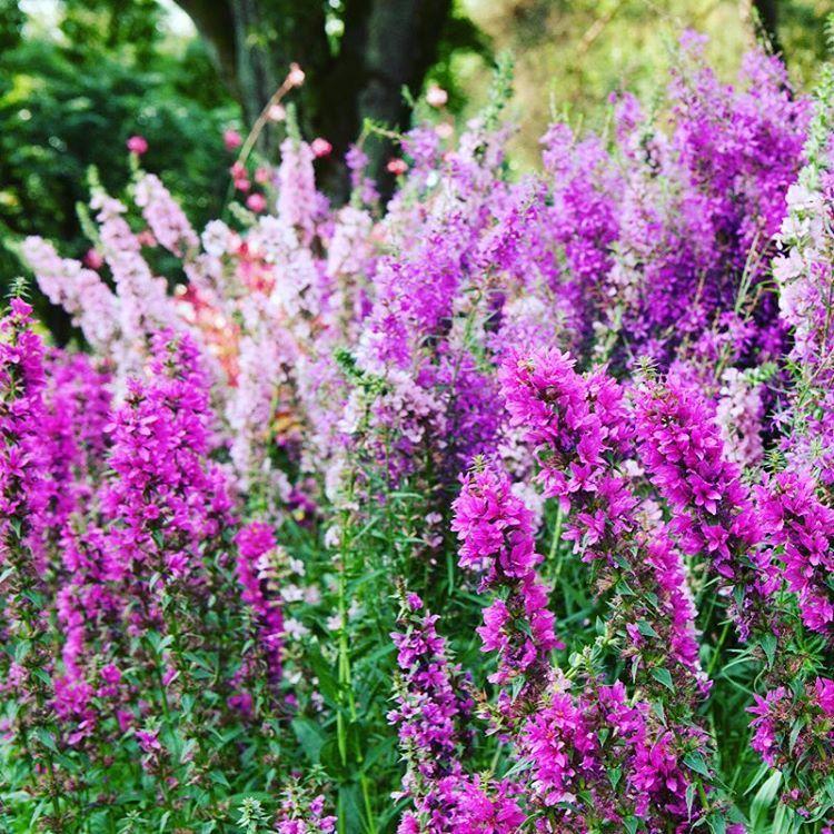 Im Bltenrausch unser Gartenfestival jetzt am Wochenende verzaubert wieder mithellip