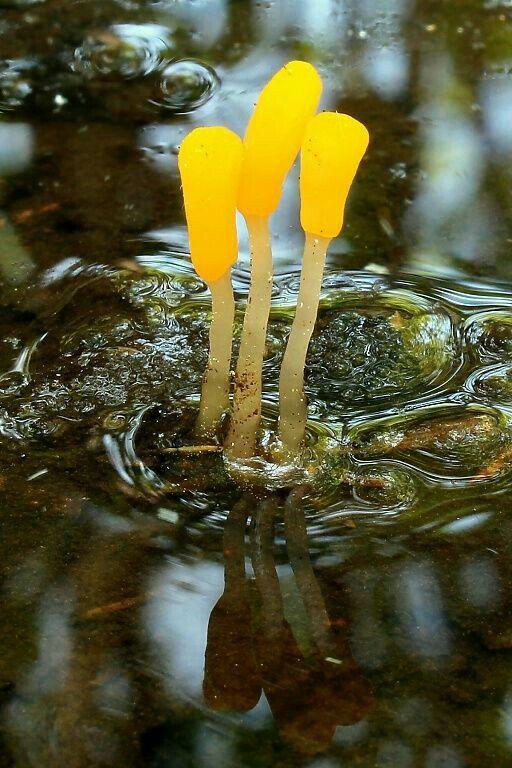 pin by rakesh kumar on mushroom