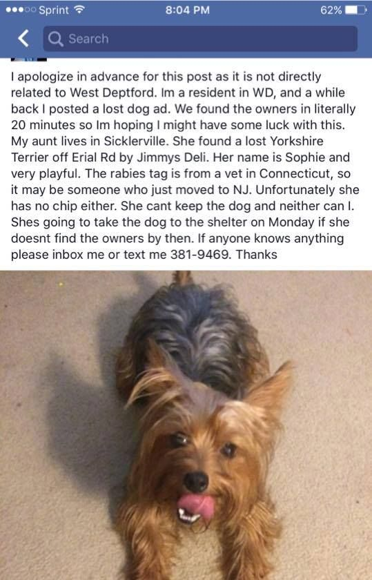 Found Dogs Lost And Found Pets New Jersey Find Pets Losing A Dog Pet News