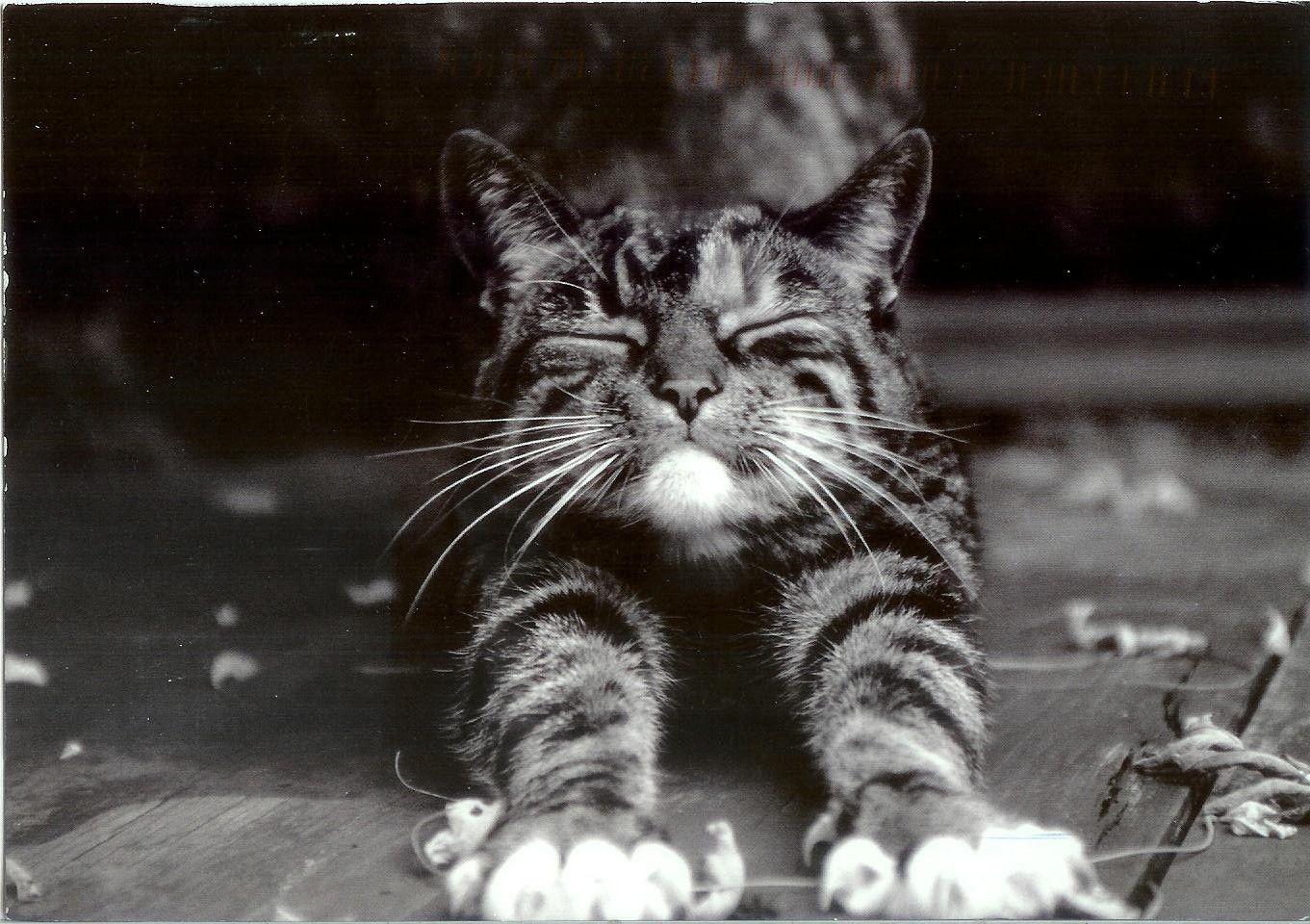 Cat Stretching Cat stretching, Cats, Cat heaven