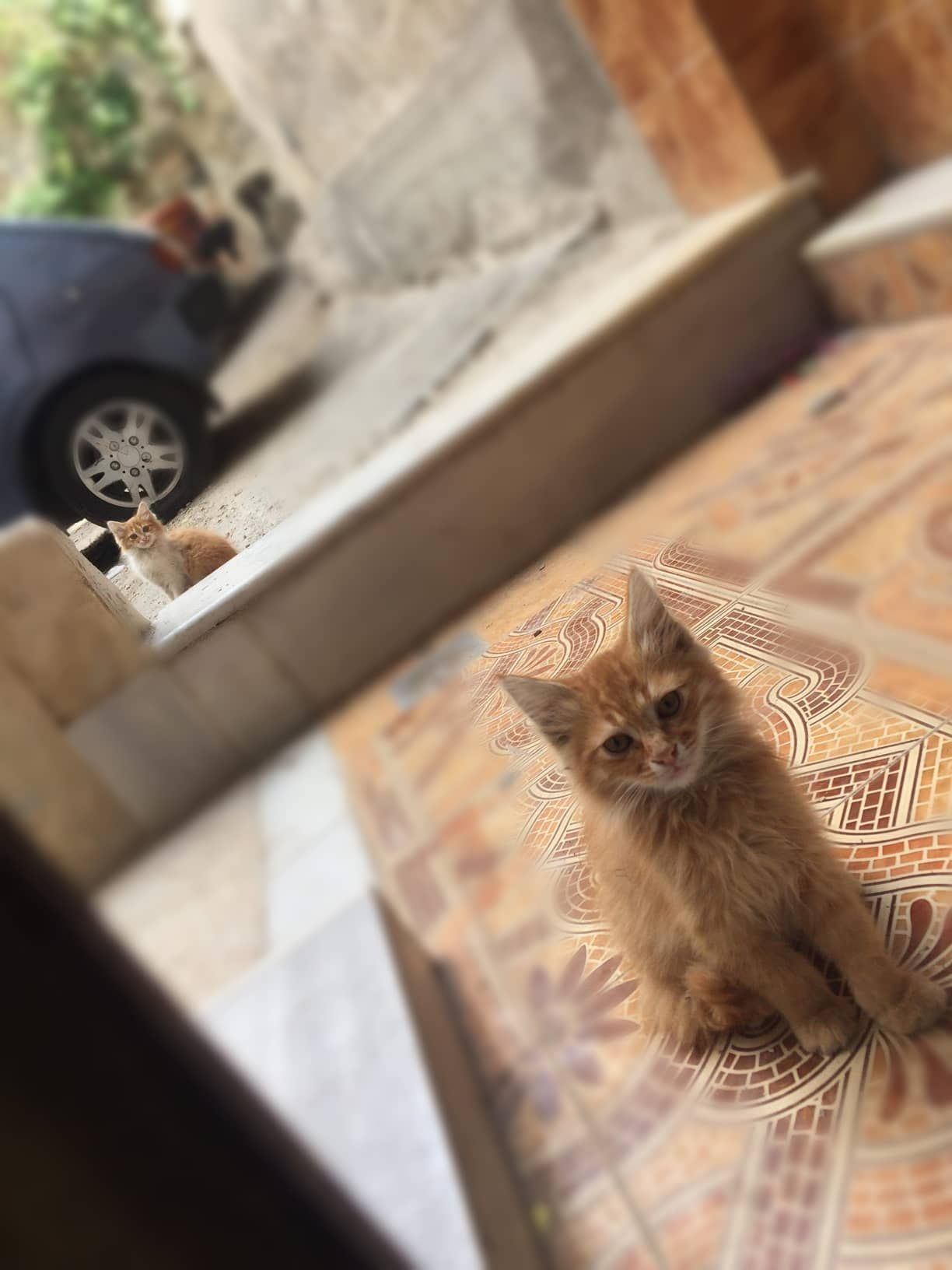 Good Morning From These Cute Cats Damascus Syria Cats Damascus Syria Cat S Damascus