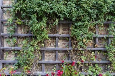 Schnell wachsende und kletternde Pflanzen für ein Spalier #schnellwachsendepflanzen Schnell wachsende und kletternde Pflanzen für ein Spalier #schnellwachsendepflanzen Schnell wachsende und kletternde Pflanzen für ein Spalier #schnellwachsendepflanzen Schnell wachsende und kletternde Pflanzen für ein Spalier #schnellwachsendepflanzen