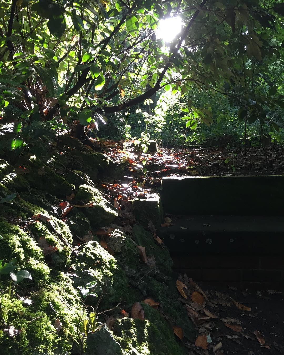 #stone #bench #woods #mossy #moss #saarbrücken #saarland