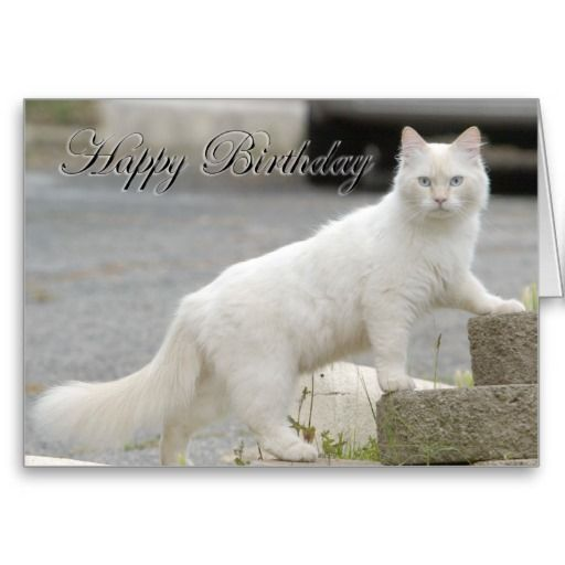 @@@Karri Best price          	White cat with Happy Birthday Card           	White cat with Happy Birthday Card in each seller & make purchase online for cheap. Choose the best price and best promotion as you thing Secure Checkout you can trust Buy bestThis Deals          	White cat with Happy Birthd...Cleck See More >>> http://www.zazzle.com/white_cat_with_happy_birthday_card-137114824643639413?rf=238627982471231924&zbar=1&tc=terrest