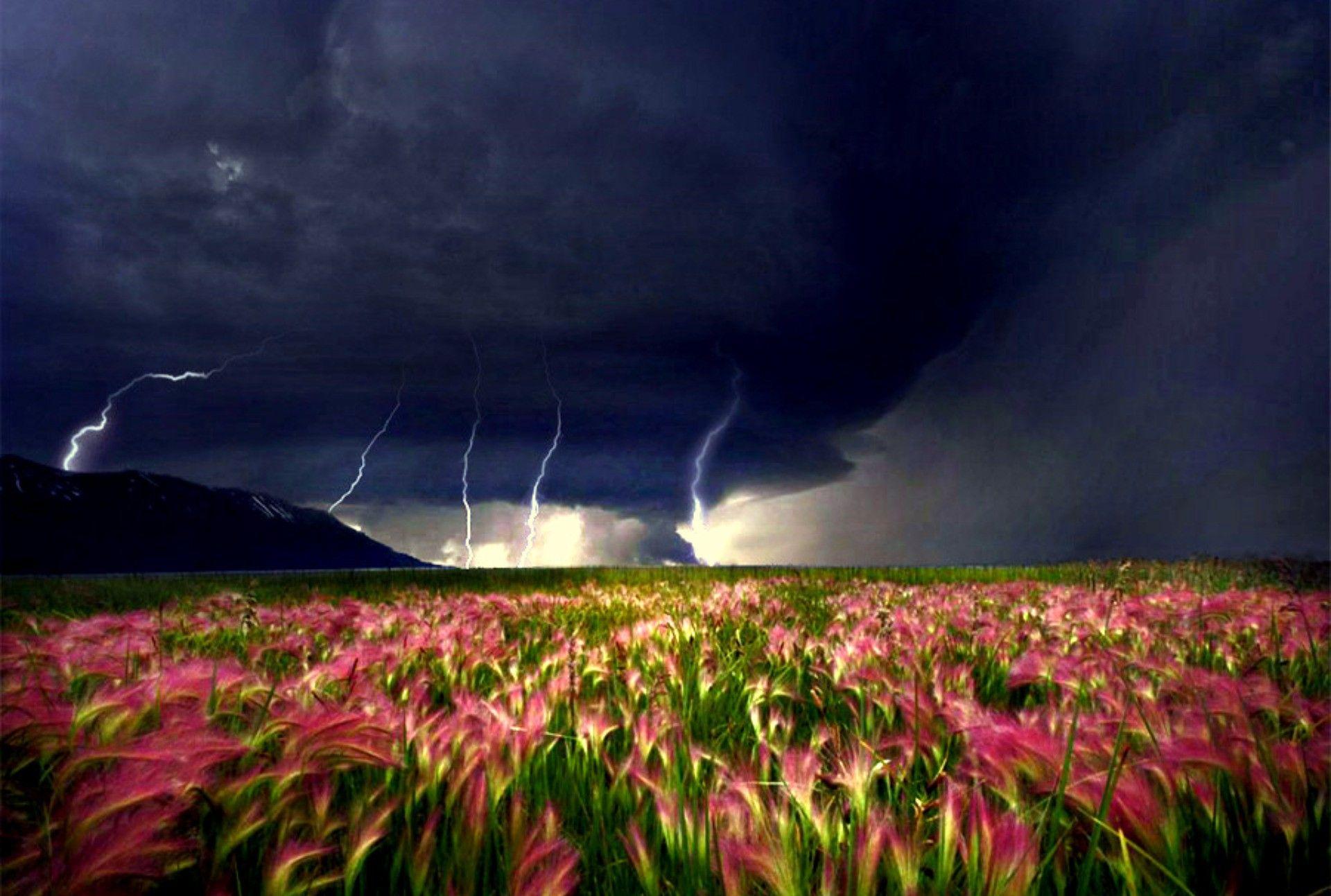 Permalink to Storm Flower Field Wallpaper