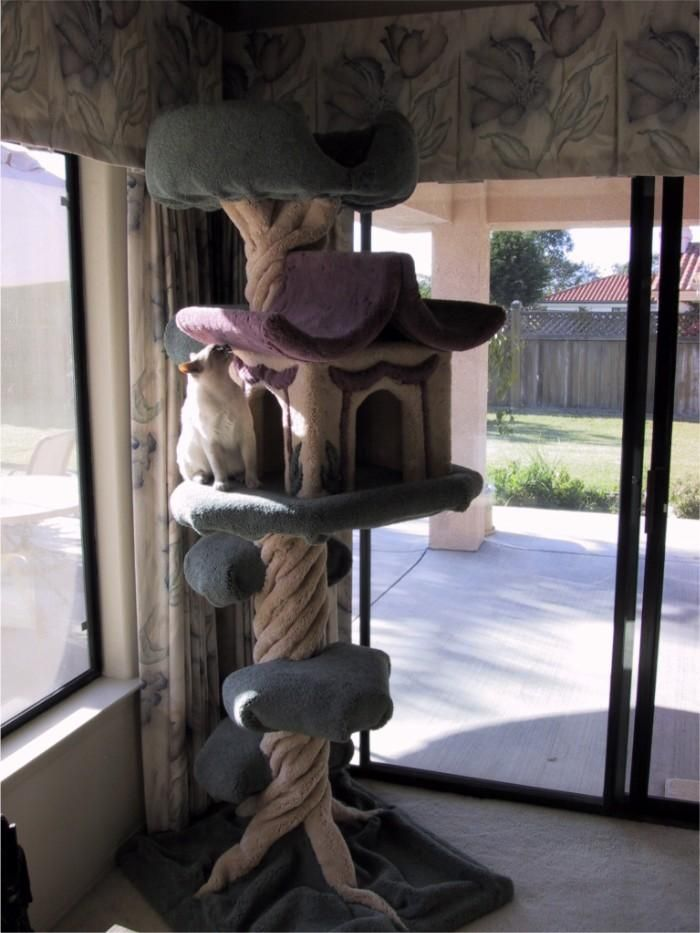 Tiki exploring her new cat tree for the first time #cathouse - What do cat want - Catsincare.com!