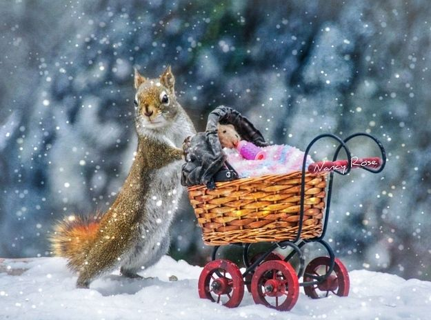 And OF COURSE, pushing teddybears around in a perambulator. | 9 Things The Squirrels Are Up To These Days