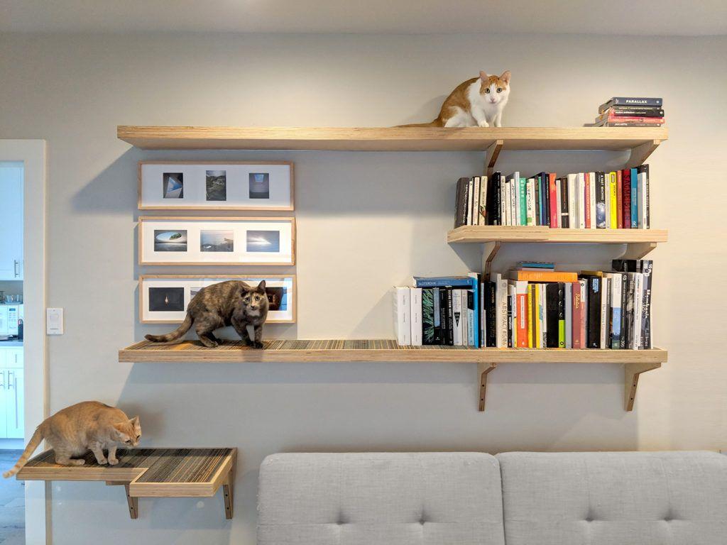 Cat library custom cat climbing shelves great