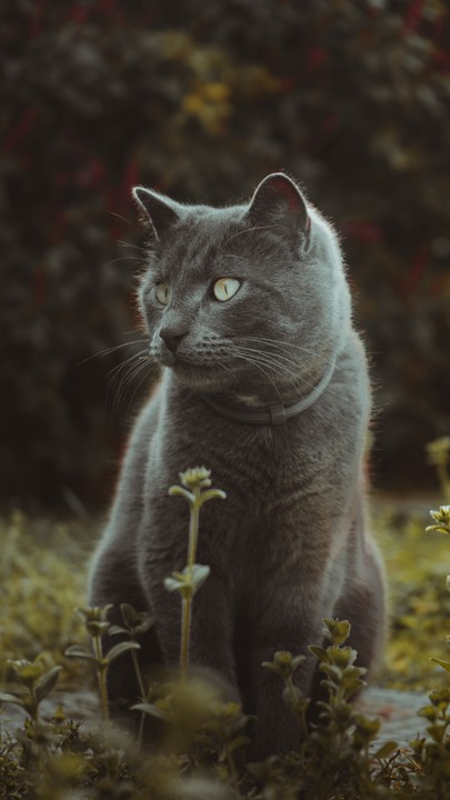 The Latest Iphone11 Iphone11 Pro Iphone 11 Pro Max Mobile Phone Hd Wallpapers Free Download Cat Cute Grass In 2020 Cute Animal Drawings Cats Iphone Wallpaper Cat