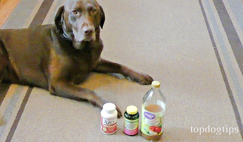How To Make Dog UTI Home Remedy Dog uti, Diabetic dog
