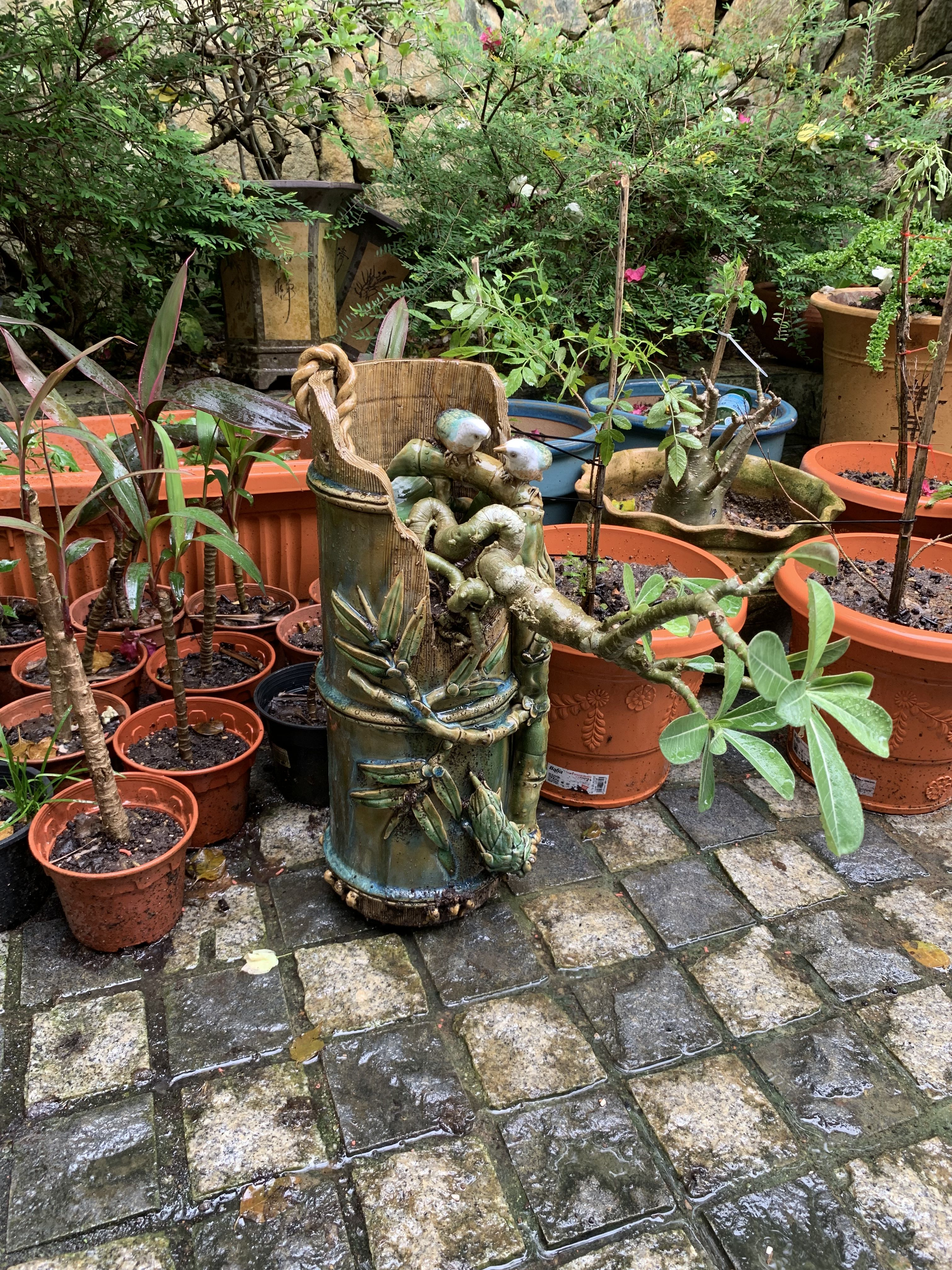 The Mini Garden Guru Your Miniature Garden Source on