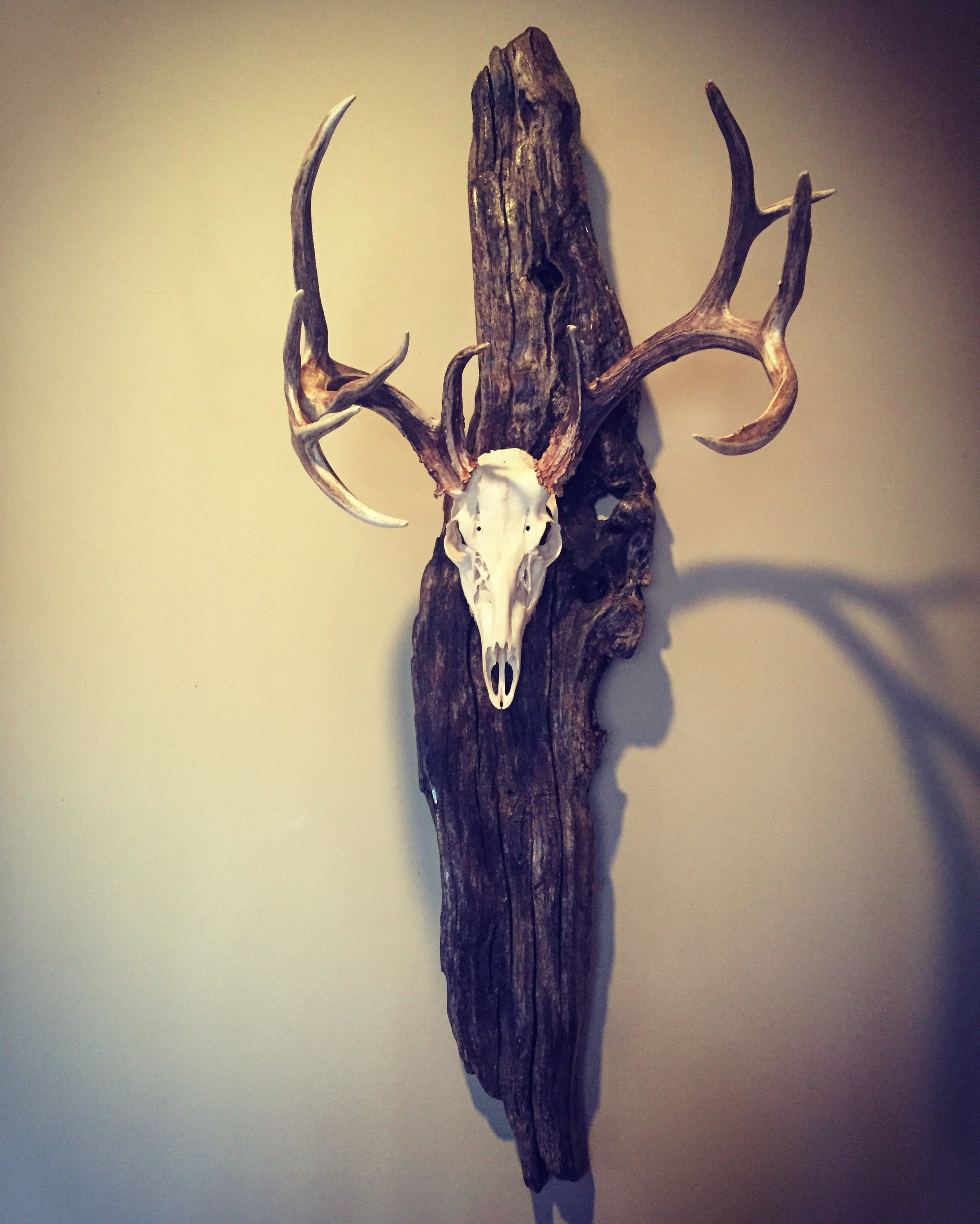 European mount on driftwood | Creations | Pinterest | European ...