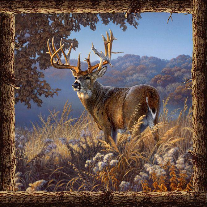 Deer Scene Napkins 20 Pack Deer Deer Photos Deer Art