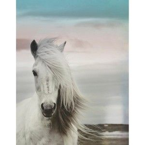 Printed Canvas - Horse 14x18 #target for $20.00