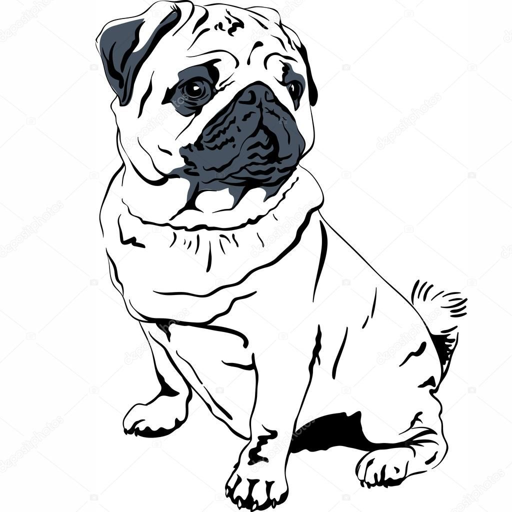 Pin By Marta Alfajarin On Recursos Pug Breed Dog Vector Puppy Sketch