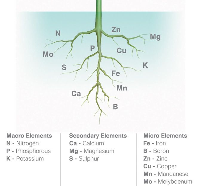 The 6 essential nutrients for healthy plants tips for Soil nutrients