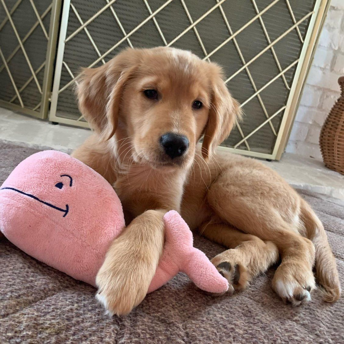 Pin by J on Pets in 2020 Super cute puppies, Cute dogs