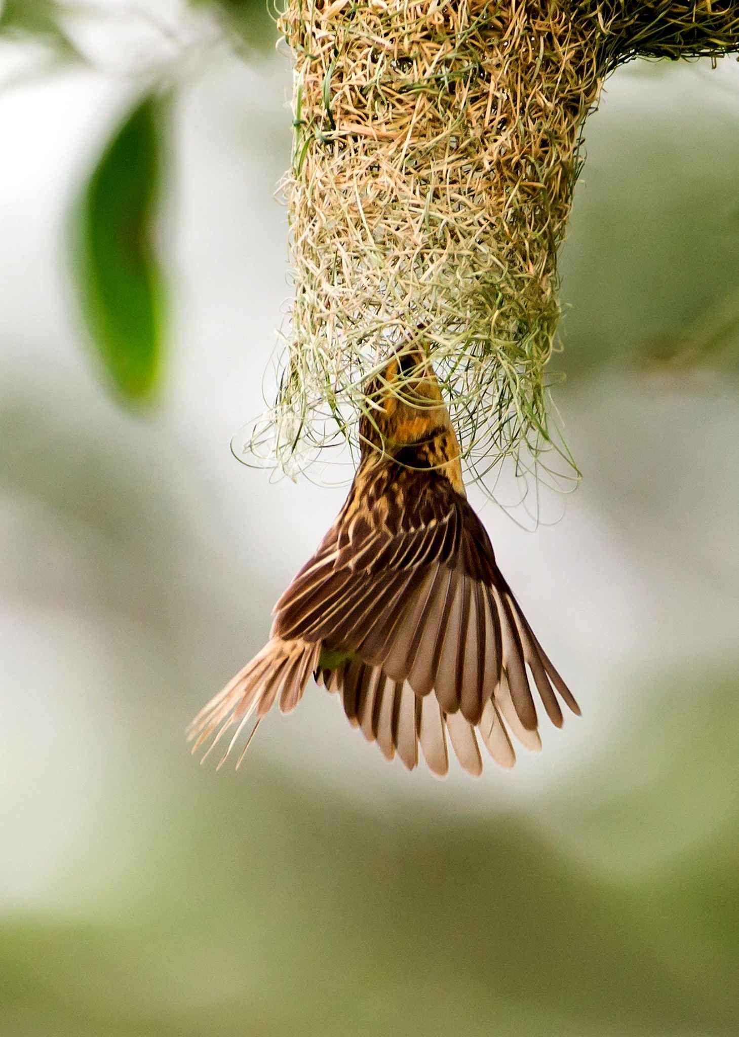 les plus belles images d 39 animaux 2014 batisseurs pinterest oiseau mouche nids et de nouveau. Black Bedroom Furniture Sets. Home Design Ideas
