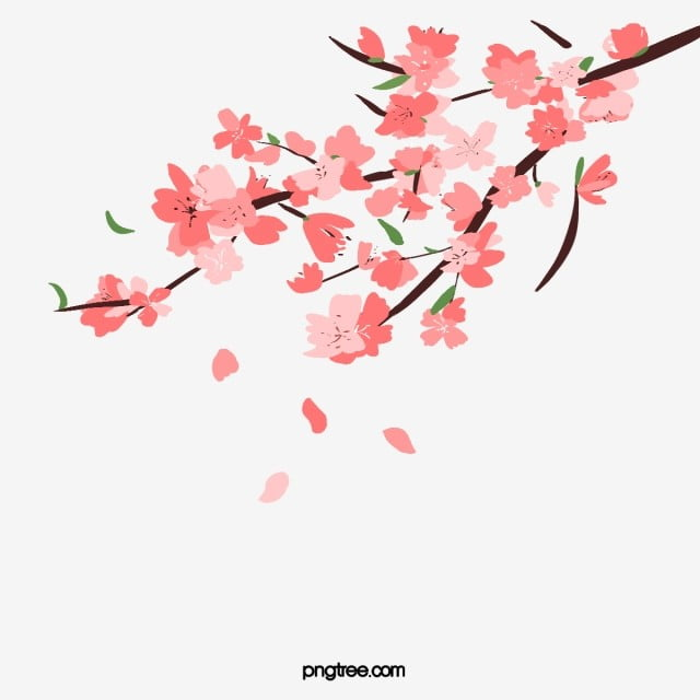 Hand Painted Spring Pink Cherry Branches Sakura Petals Cherry Blossom Clipart Spring Plant Png Transparent Clipart Image And Psd File For Free Download Flower Png Images Flower Backgrounds Petals