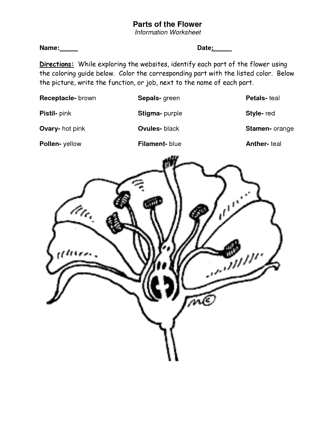 Parts Of A Flower Coloring Page 2