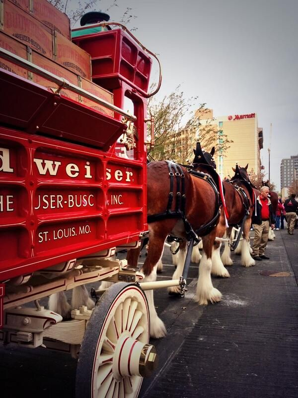 Budweiser Clydesdales Beer 101 Clydesdale Horses