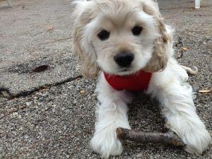 adorable (: