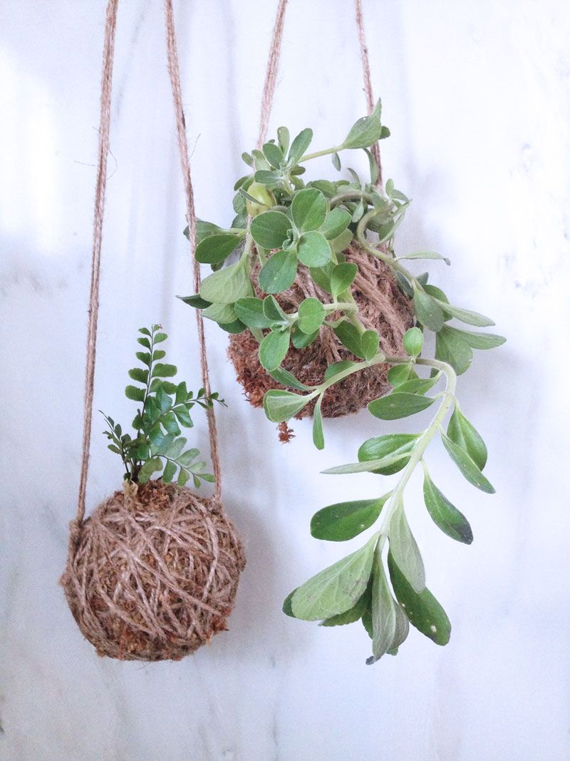 Make your own moss ball hanging plant holders great for succulents and cacti diy make it potted plants and string