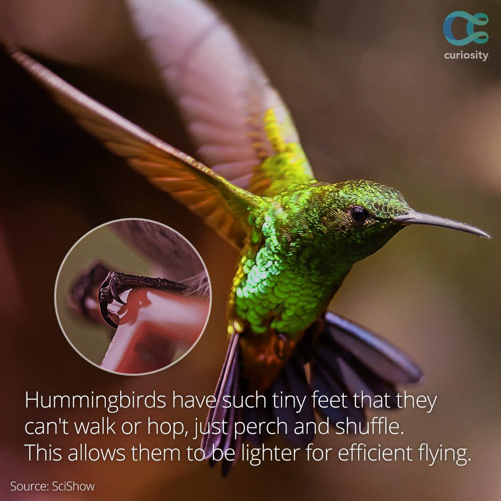 You may know that the wings of a hummingbird flap at mind