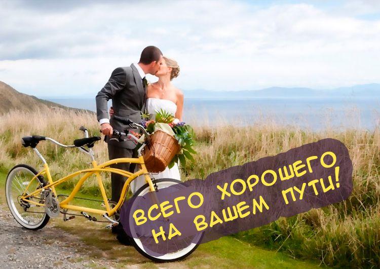 наколка имеет поздравления друга с днем свадьбы прикольные суккулентов, выращиваемых
