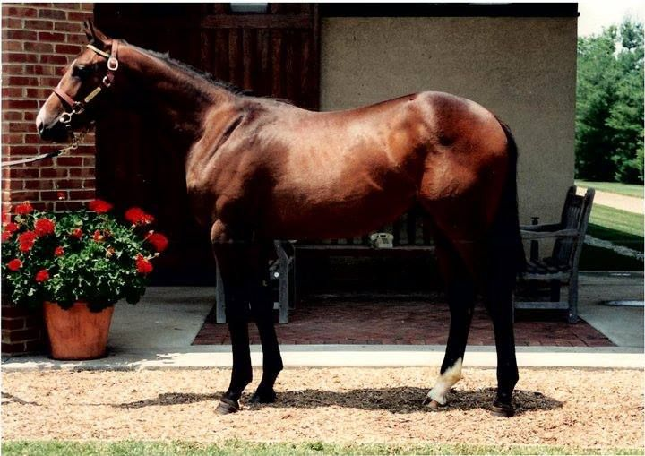 A.P. Indy as a yearling