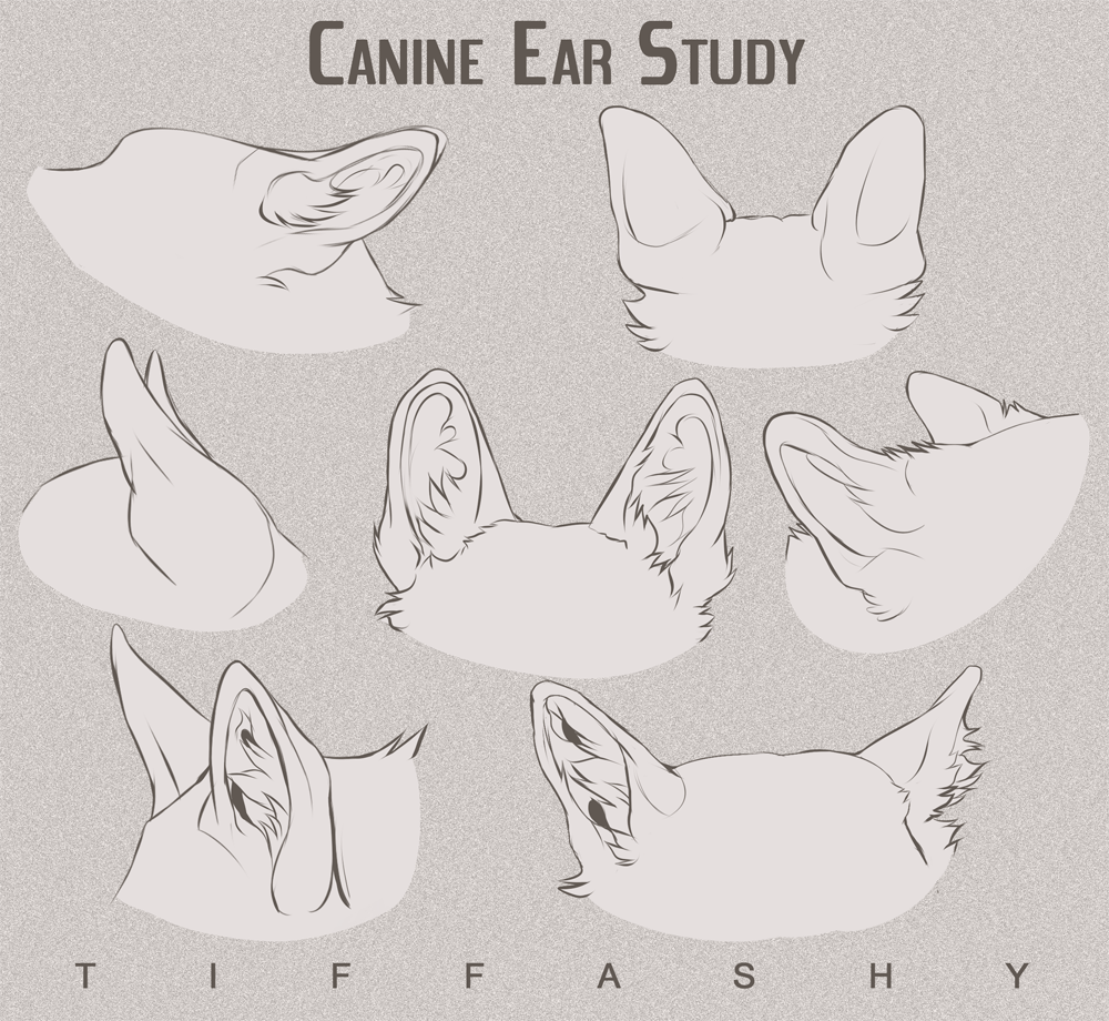 Find This Pin And More On Drawing How To Draw Canine Dog Ears