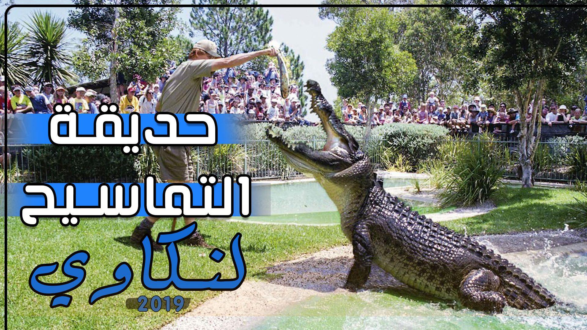 حديقة التماسيح في لنكاوي بماليزيا Animals