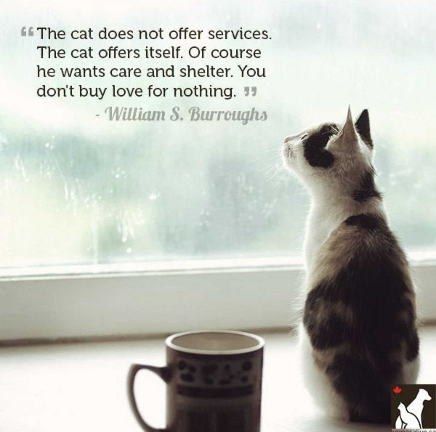 Quotes About Cats Pinwhocares Anyway On Black Cats And The Tao Of Zen