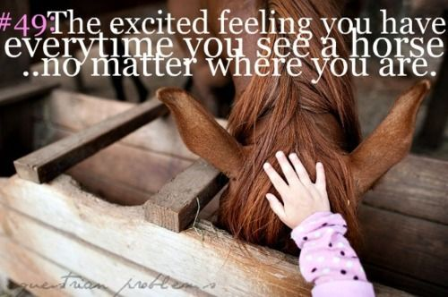 Equestrian Quotes and Sayings | Visit equestrianproblemss.tumblr.com