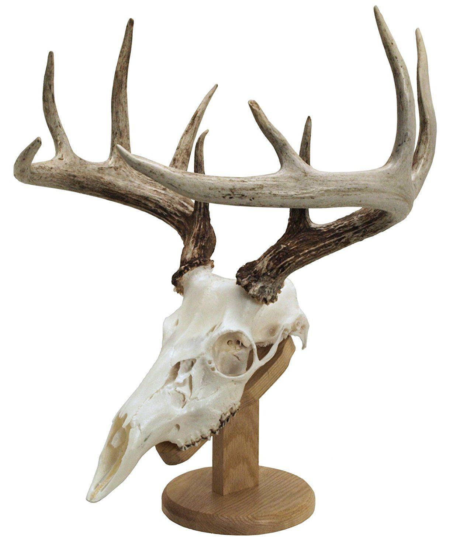 Amazon.com: Walnut Hollow Country Solid Wood Skull Display ...