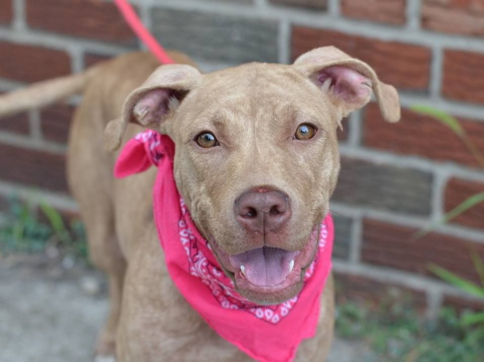TO BE DESTROYED 8/11/14 Brooklyn Center P My name is