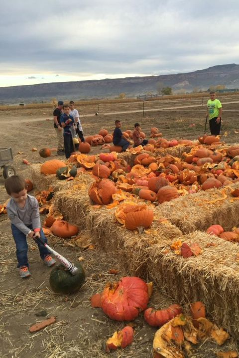 40 Best Pumpkin Farms Near You to Visit with Your Family This Fall