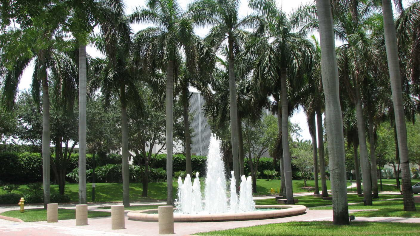 Types Of Palm Trees | Labels: Too Many Palms | Tropical garden, University  of miami hurricanes, Palm trees