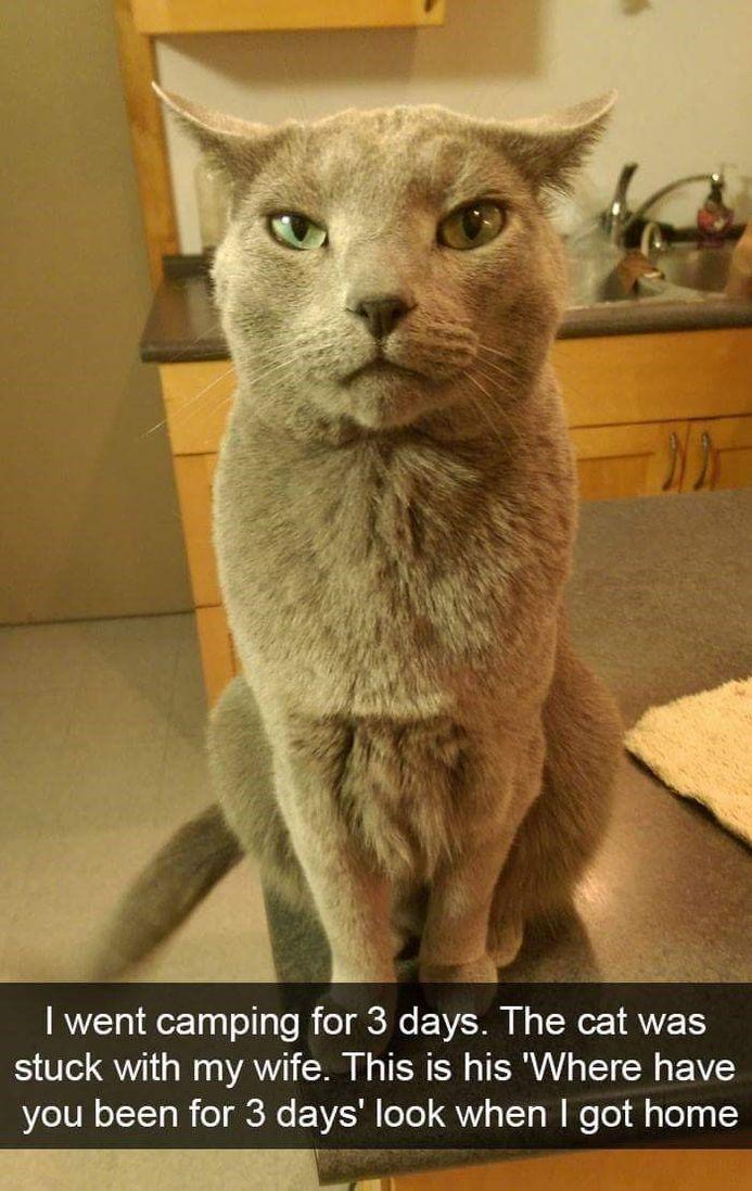 35 Funny Snapchat Cat – Funnyfoto