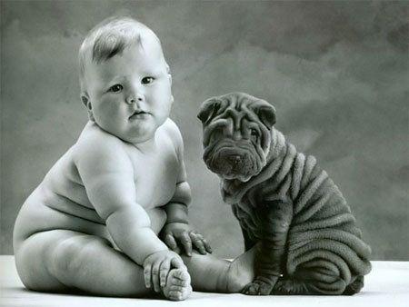 Top Pudgy Chubby Adorable Dog - 07bcb50f2876f615dfc60d718fe25ebb  Pic_586164  .jpg