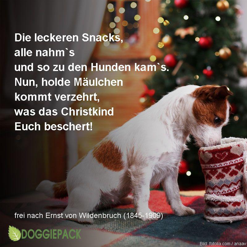 Ein klassisches Weihnachtsgedicht für unsere Hundenasen interpretiert.  Der Hunde kam in den Winterwald, der Schnee war weiß, der Schnee war kalt. Doch als das Christkind ihm erschien, fing`s an im Winterwald zu blühn.  Christkindlein trat zu einem Baum, … Weiter