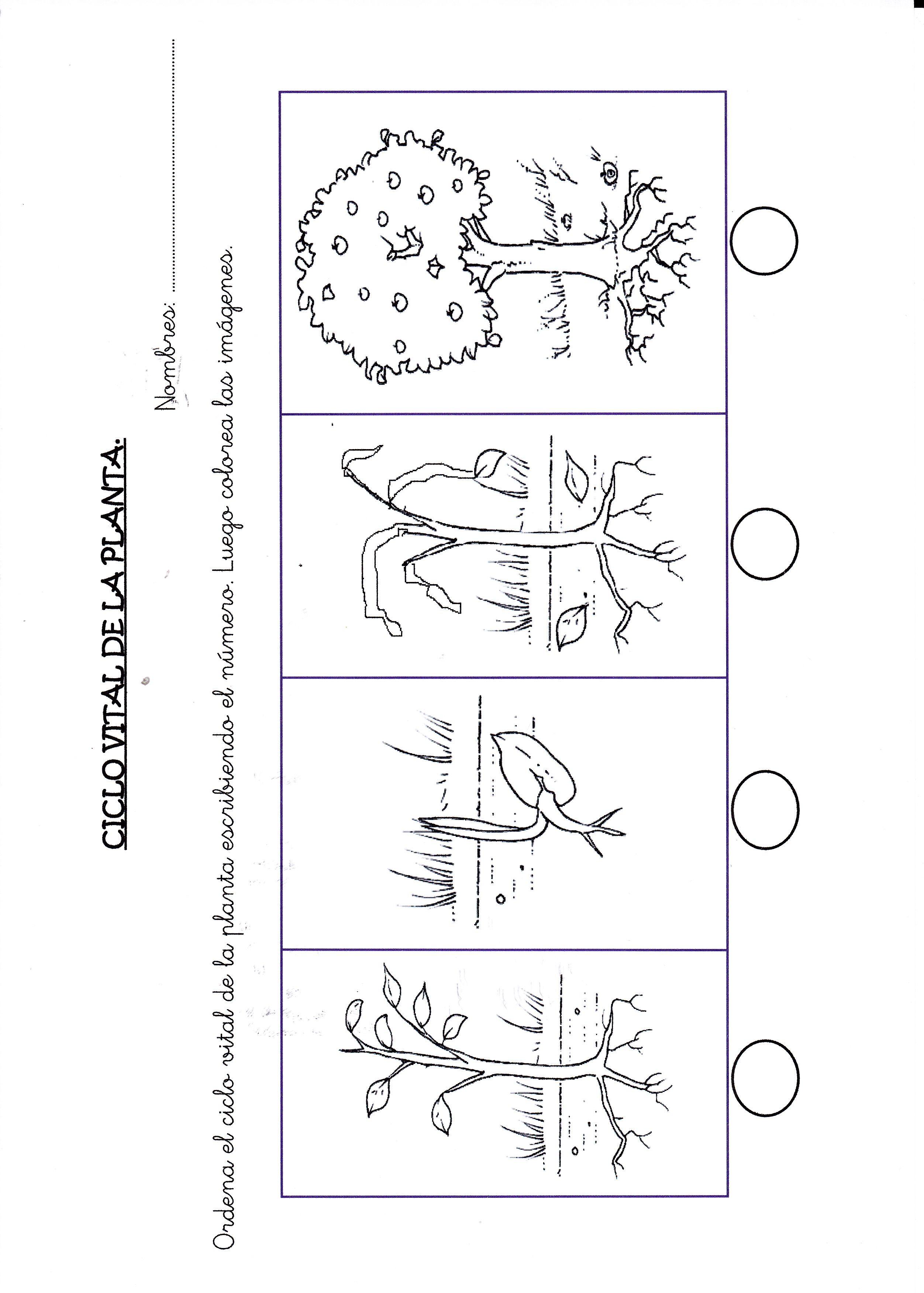 Resultado de imagen para secuencia del crecimiento de una planta ...