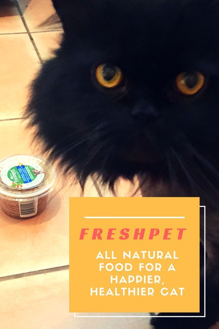 Freshpet pet food fresh all natural food for a happier