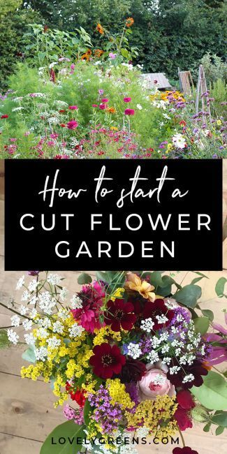 Photo of Growing your own Cut Flower Patch for Homegrown Bouqets #gardening #backyard gar…